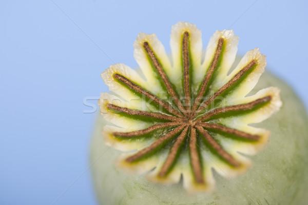 Amapola semillas azul naturaleza fondo drogas Foto stock © ivonnewierink