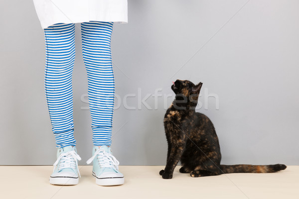 Macska felfelé néz étel ül stúdió lány Stock fotó © ivonnewierink
