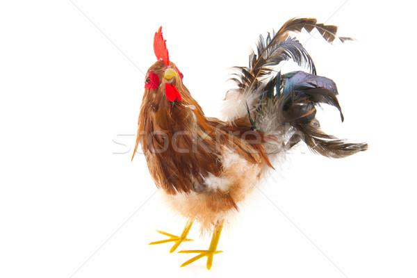 Cock Stock photo © ivonnewierink