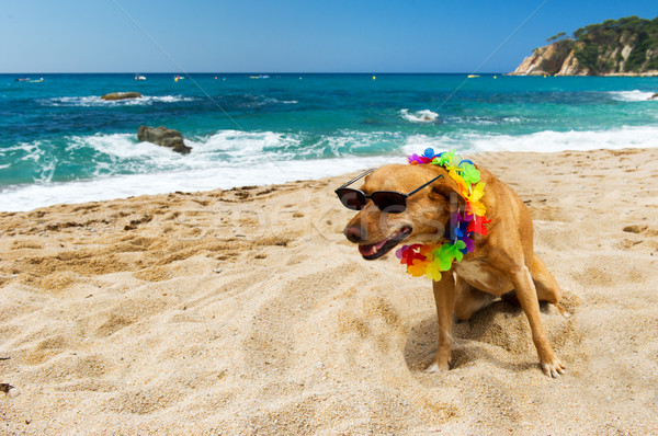 Dog on tropical vacation Stock photo © ivonnewierink