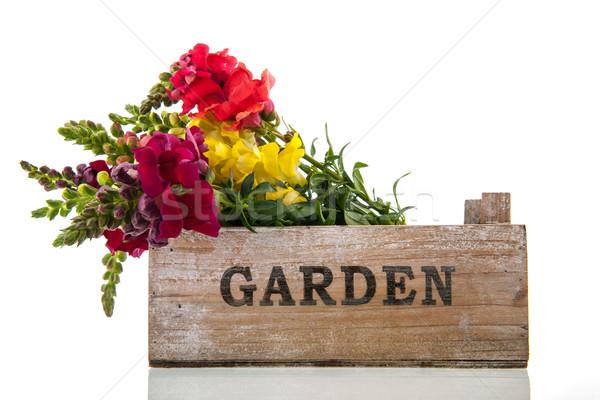 Smoka kwiaty skrzynia bukiet ogród Zdjęcia stock © ivonnewierink