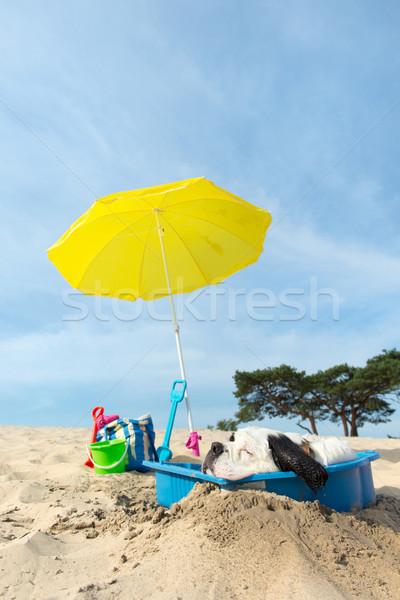 Koeling beneden hond strand grappig water Stockfoto © ivonnewierink