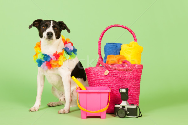 Black and white dog on vacation Stock photo © ivonnewierink