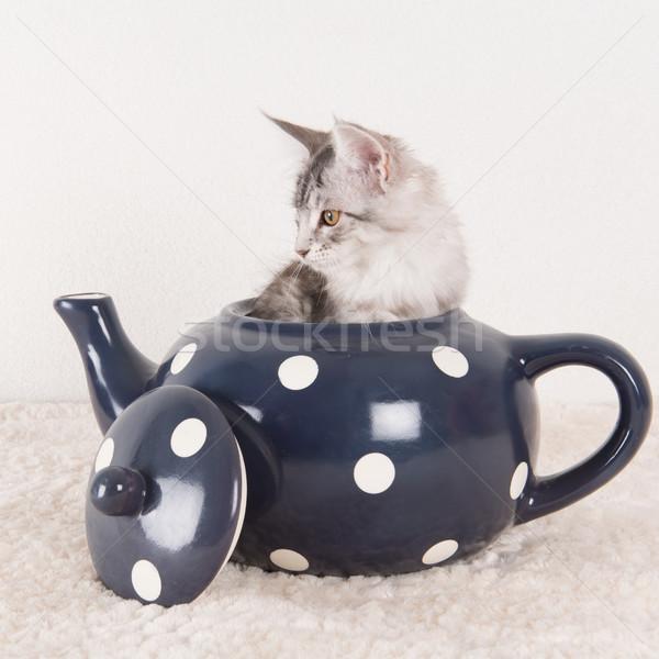 Мэн котенка чай банка мало смешные Сток-фото © ivonnewierink