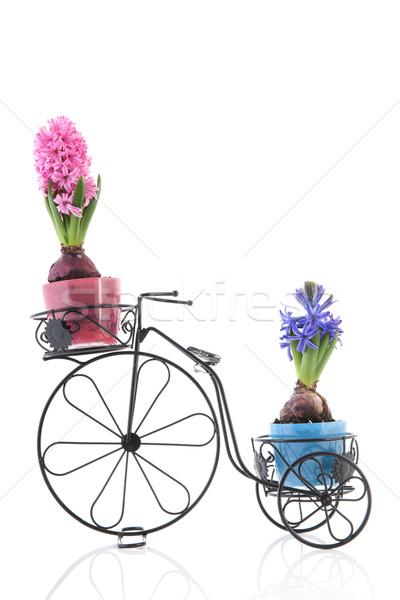 Velho bicicleta colorido isolado branco flor Foto stock © ivonnewierink