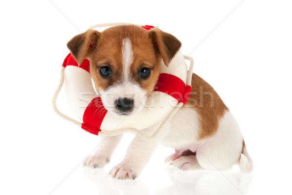 Szczeniak ratowania psa odizolowany biały zwierząt Zdjęcia stock © ivonnewierink