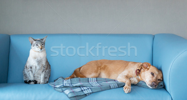 Cat and dog Stock photo © ivonnewierink