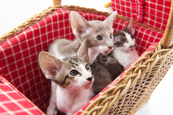Little cats hiding in picnic basket Stock photo © ivonnewierink