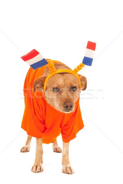 Holandés fútbol perro naranja banderas Foto stock © ivonnewierink