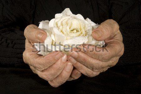 öreg kezek tart fehér rózsa férfi Stock fotó © ivonnewierink
