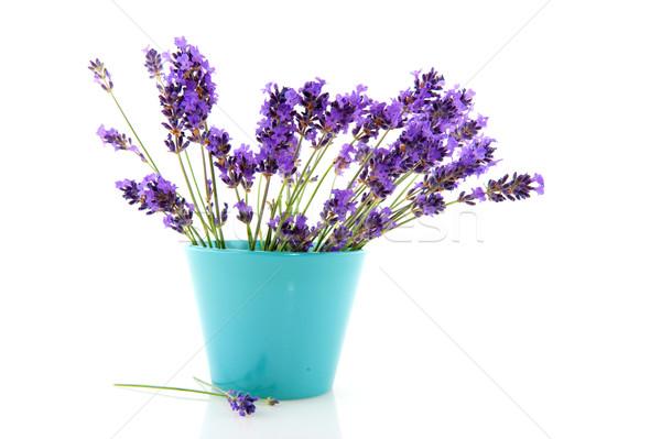 лаванды синий цветок банка букет цветы синий Сток-фото © ivonnewierink