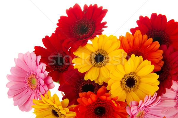 Corner colorful Gerber flowers Stock photo © ivonnewierink