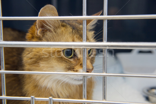 Kedi kafes çubuklar hayvan yoksul evcil hayvan Stok fotoğraf © ivonnewierink
