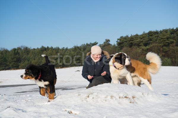 Owner with Berner Sennenhund and Saint Bernhard dog Stock photo © ivonnewierink
