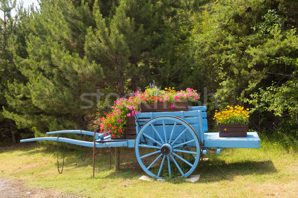 Lavender cart with flowers Stock photo © ivonnewierink
