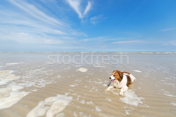Dog swimming in water Stock photo © ivonnewierink