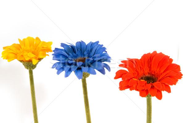 шелковые цветы желтый красный синий Сток-фото © ivonnewierink