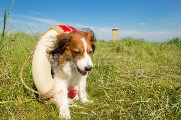 спасательные собака природы голландский острове Маяк Сток-фото © ivonnewierink