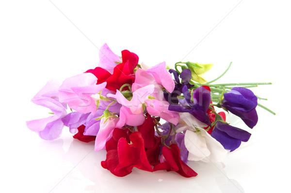 Garden flowers vetching Stock photo © ivonnewierink