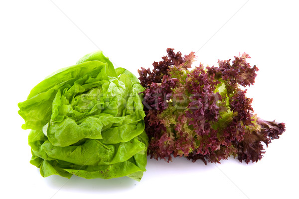Lollo Rosso and butterhead salad Stock photo © ivonnewierink