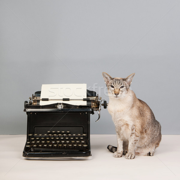 Siamese cat on gray background with type writer Stock photo © ivonnewierink