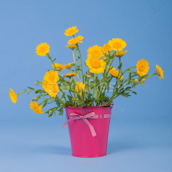 Bukiet żółte kwiaty niebieski różowy wiadro tle Zdjęcia stock © ivonnewierink