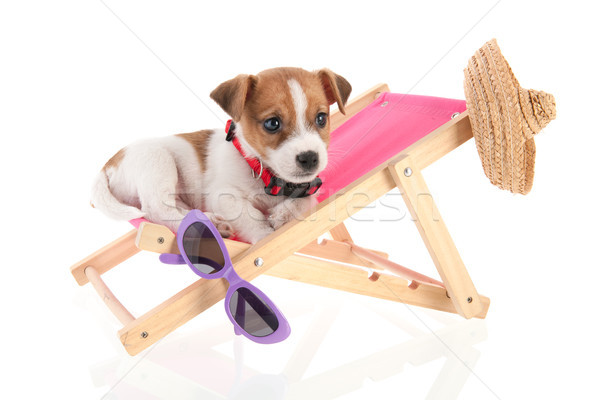Plaj köpek yavrusu küçük sevimli sandalye Stok fotoğraf © ivonnewierink