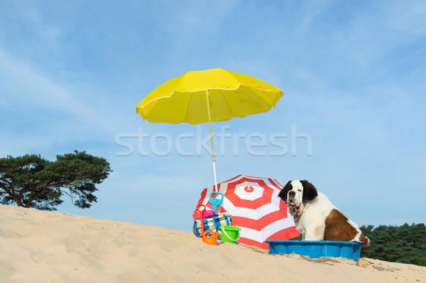 Chłodzenie w dół psa plaży funny wody Zdjęcia stock © ivonnewierink