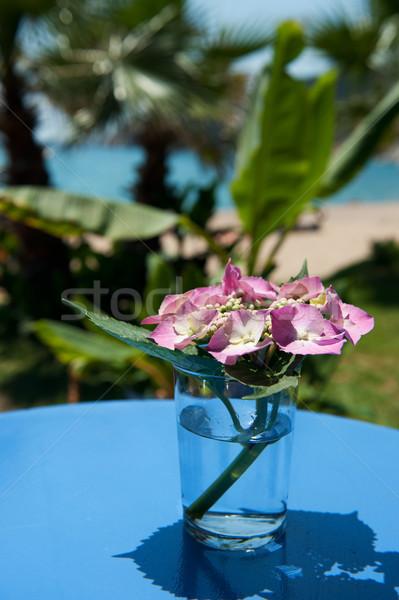 Pink Hydrangea Stock photo © ivonnewierink