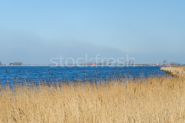 Landscape with water reed and horizon Stock photo © ivonnewierink