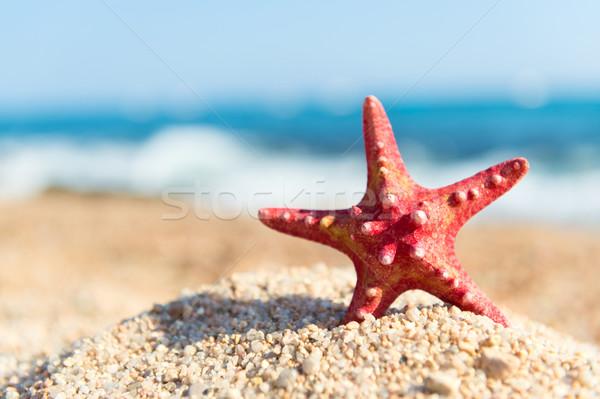赤 ヒトデ ビーチ 立って 水 風景 ストックフォト © ivonnewierink