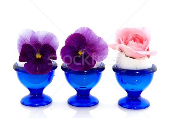 バラ ピンクのバラ 紫色 青 卵 カップ ストックフォト © ivonnewierink