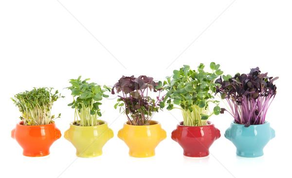Fresh garden cress in colorful crockery Stock photo © ivonnewierink