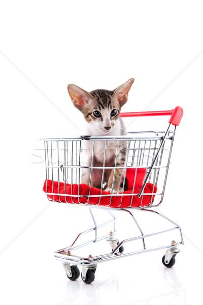 Siamese kitten in shopping cart Stock photo © ivonnewierink