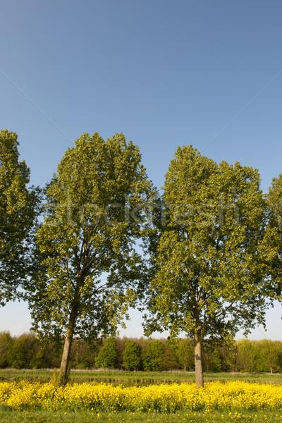 Trees in vertical landscape Stock photo © ivonnewierink