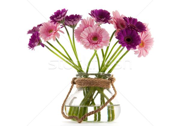 Pink and purple Gerber flowers Stock photo © ivonnewierink