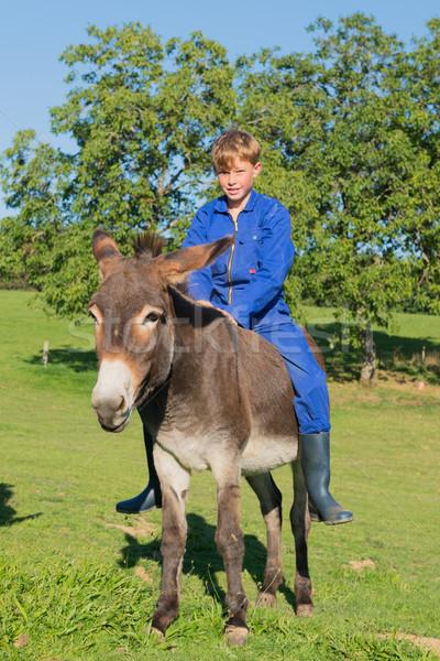 Gospodarstwa chłopca osioł posiedzenia dziecko lata Zdjęcia stock © ivonnewierink