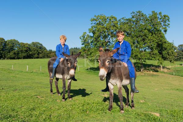 Fazenda meninos equitação verão animais criança Foto stock © ivonnewierink