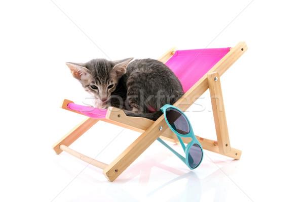 Siamese tabby kitten on beach chair Stock photo © ivonnewierink