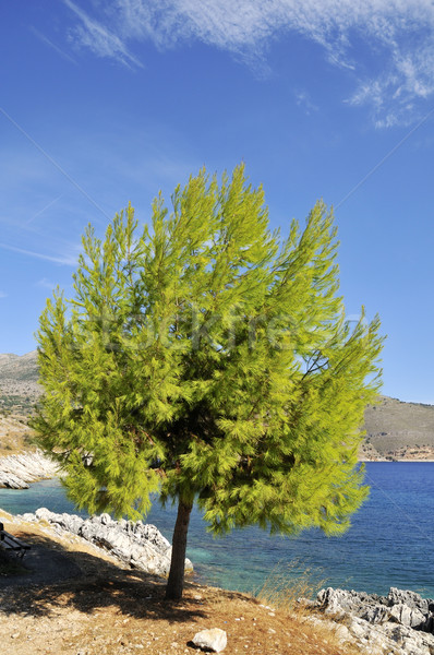 Tree at the coast Stock photo © ivonnewierink