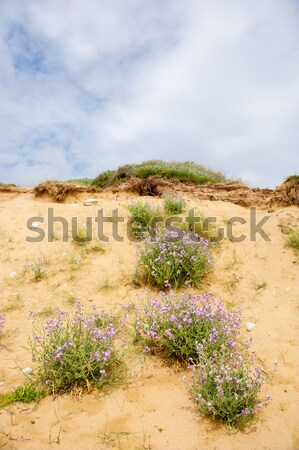 Coast island Oleron Stock photo © ivonnewierink