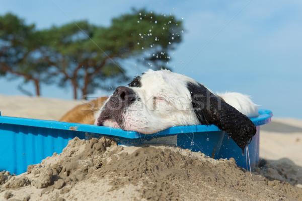 Resfriamento para baixo cão água verão praia Foto stock © ivonnewierink