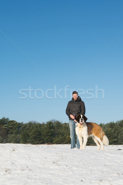 Propriétaire sauvetage chien neige grand montagnes Photo stock © ivonnewierink