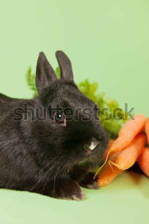 Stock fotó: Nyúl · friss · répák · köteg · zöld · étel