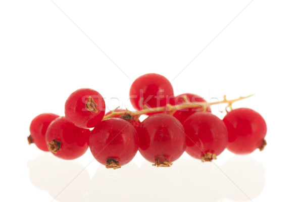 Red currants isolated on white Stock photo © ivonnewierink