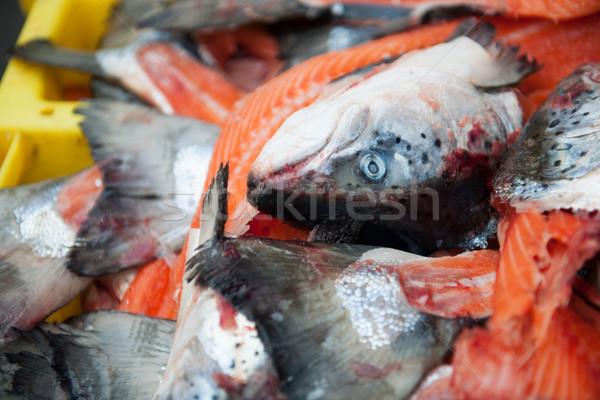 łososia rynku sklep zwierząt Zdjęcia stock © ivonnewierink
