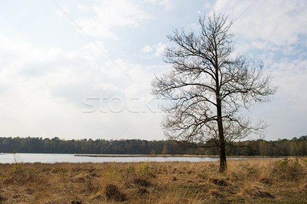 Tree in winter Stock photo © ivonnewierink