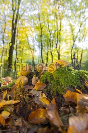Bos blad bomen champignons landschap veel Stockfoto © ivonnewierink