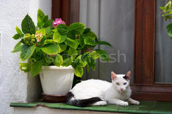 White cat in Spanish window Stock photo © ivonnewierink