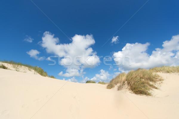 Dunes at Dutch wadden island Stock photo © ivonnewierink